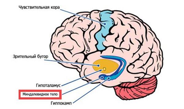 Что происходит с нашим мозгом во время прокрастинации? - 3