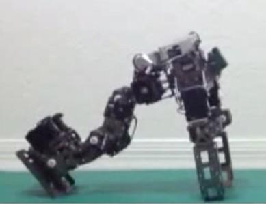 Роботов научили падать безопасно, изучив падения кошек - 1