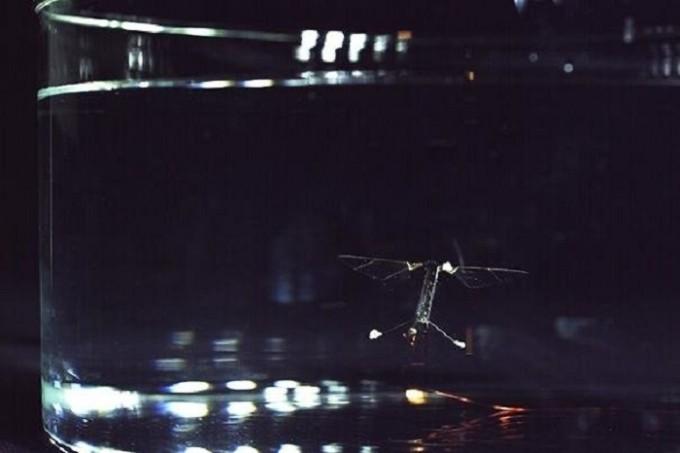 RoboBee: первый в мире летающий робот-подводная лодка - 1