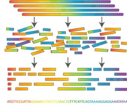 Как секвенируют ДНК - 2