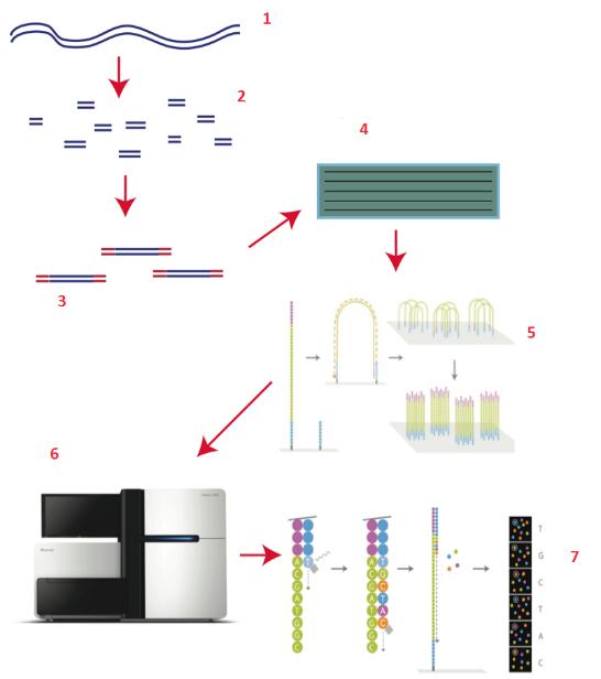 Как секвенируют ДНК - 4