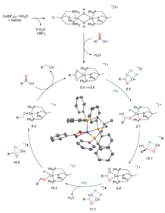 Найден дешёвый катализатор, который превращает карбоновые кислоты в алкоголь - 2