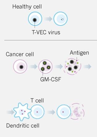 Первый генетически модифицированный вирус одобрен для лечения рака - 2