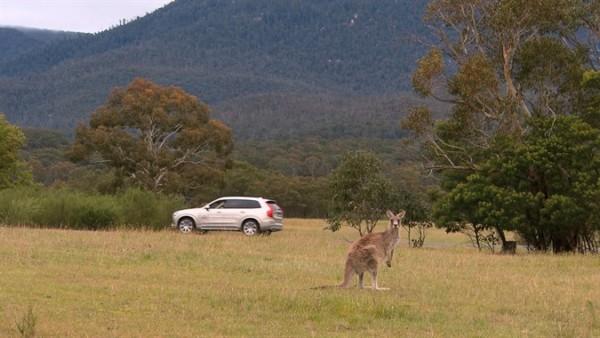 Volvo Cars создает первую в мире систему обнаружения и предотвращения столкновений с кенгуру