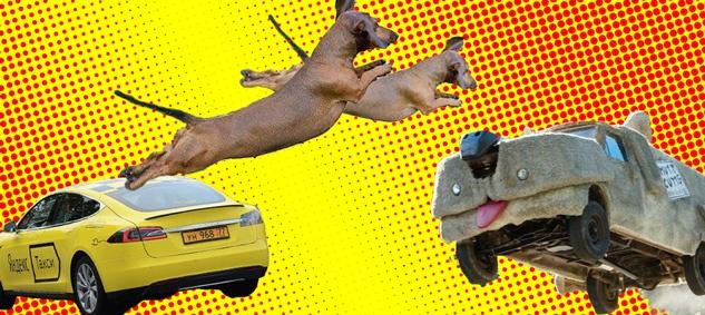 Яндекс.Такси, перевозка животных