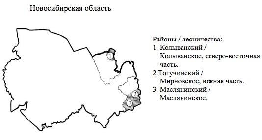 Пихтовые леса Сибири уничтожают жуки размером два миллиметра - 10