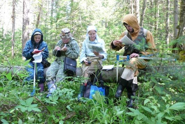 Пихтовые леса Сибири уничтожают жуки размером два миллиметра - 16