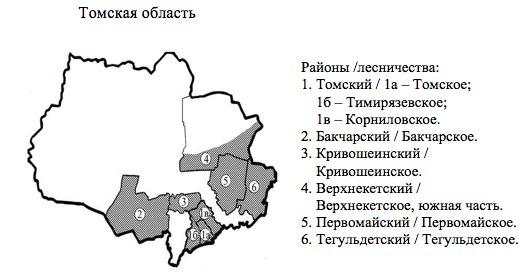 Пихтовые леса Сибири уничтожают жуки размером два миллиметра - 8