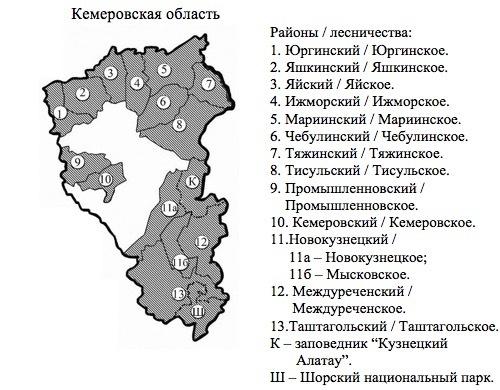 Пихтовые леса Сибири уничтожают жуки размером два миллиметра - 9