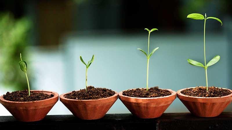 5 полезных советов бизнесмену, или От стартапа до «взрослой» компании - 1