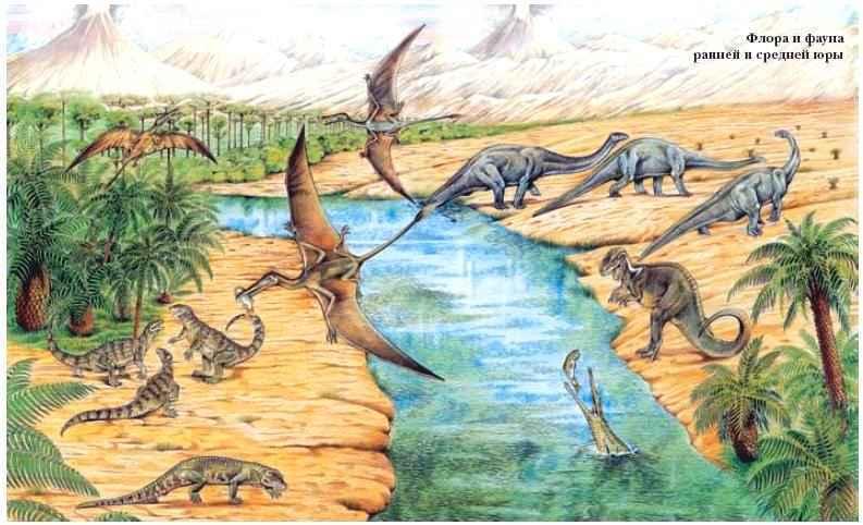 Эволюция животных как серия технологических прорывов - 10