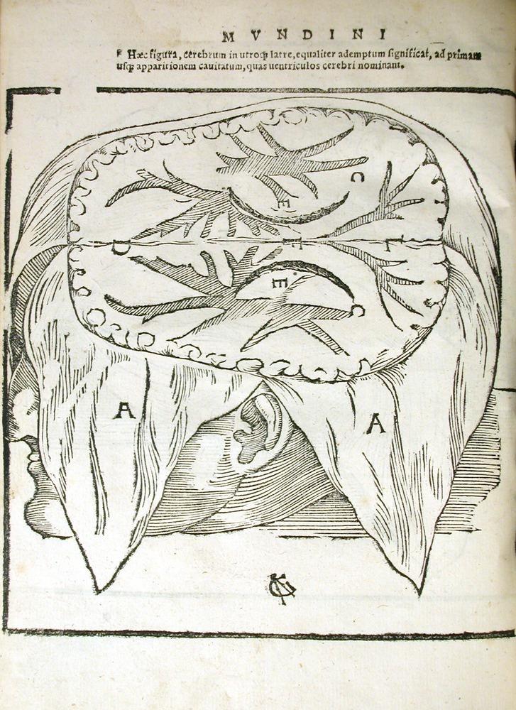 История изучения мозга от Древнего Египта до начала XX века - 13