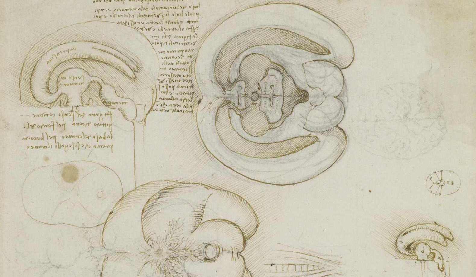 История изучения мозга от Древнего Египта до начала XX века - 15