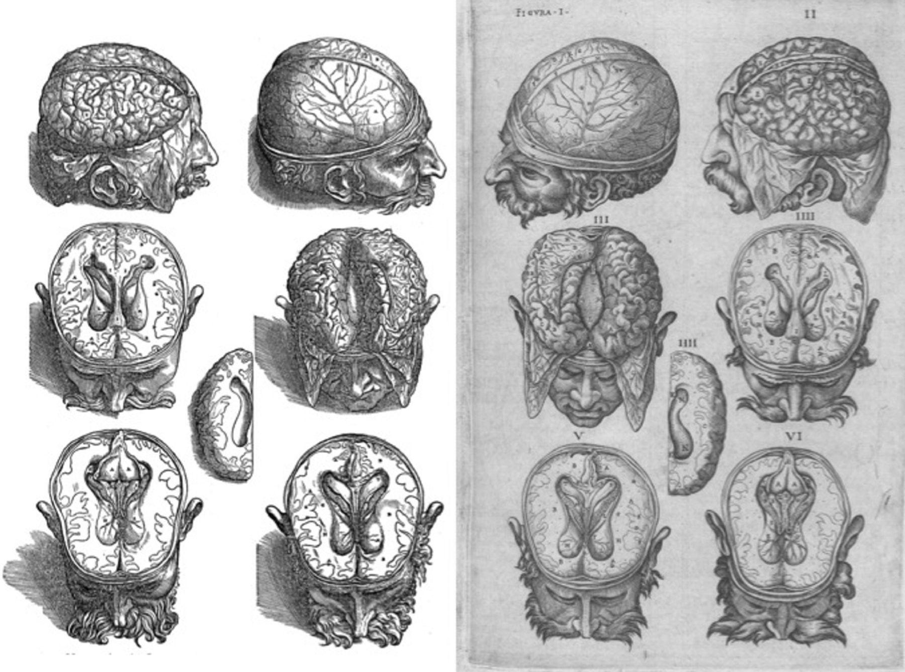 История изучения мозга от Древнего Египта до начала XX века - 16