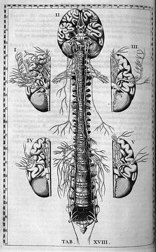 История изучения мозга от Древнего Египта до начала XX века - 18