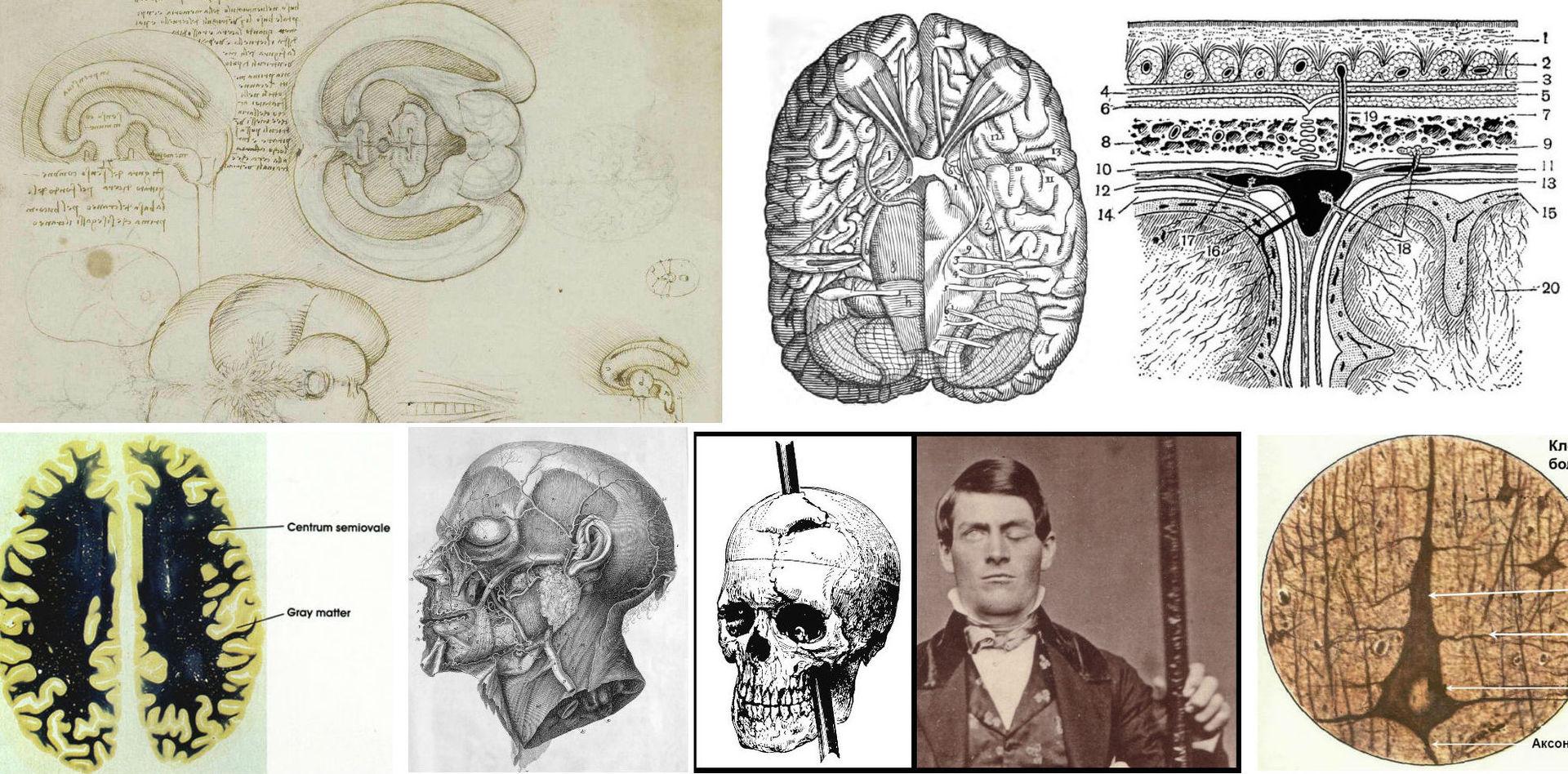 История изучения мозга от Древнего Египта до начала XX века - 2