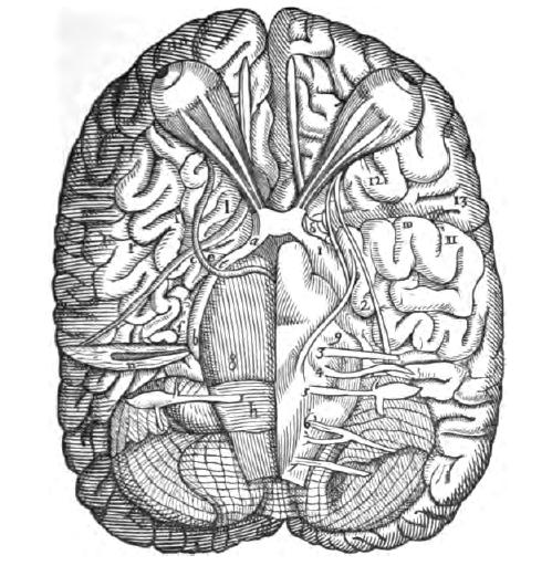 История изучения мозга от Древнего Египта до начала XX века - 20