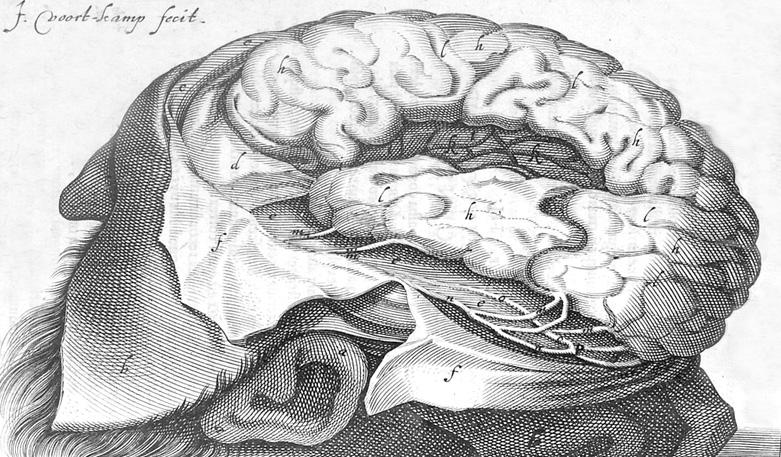 История изучения мозга от Древнего Египта до начала XX века - 23
