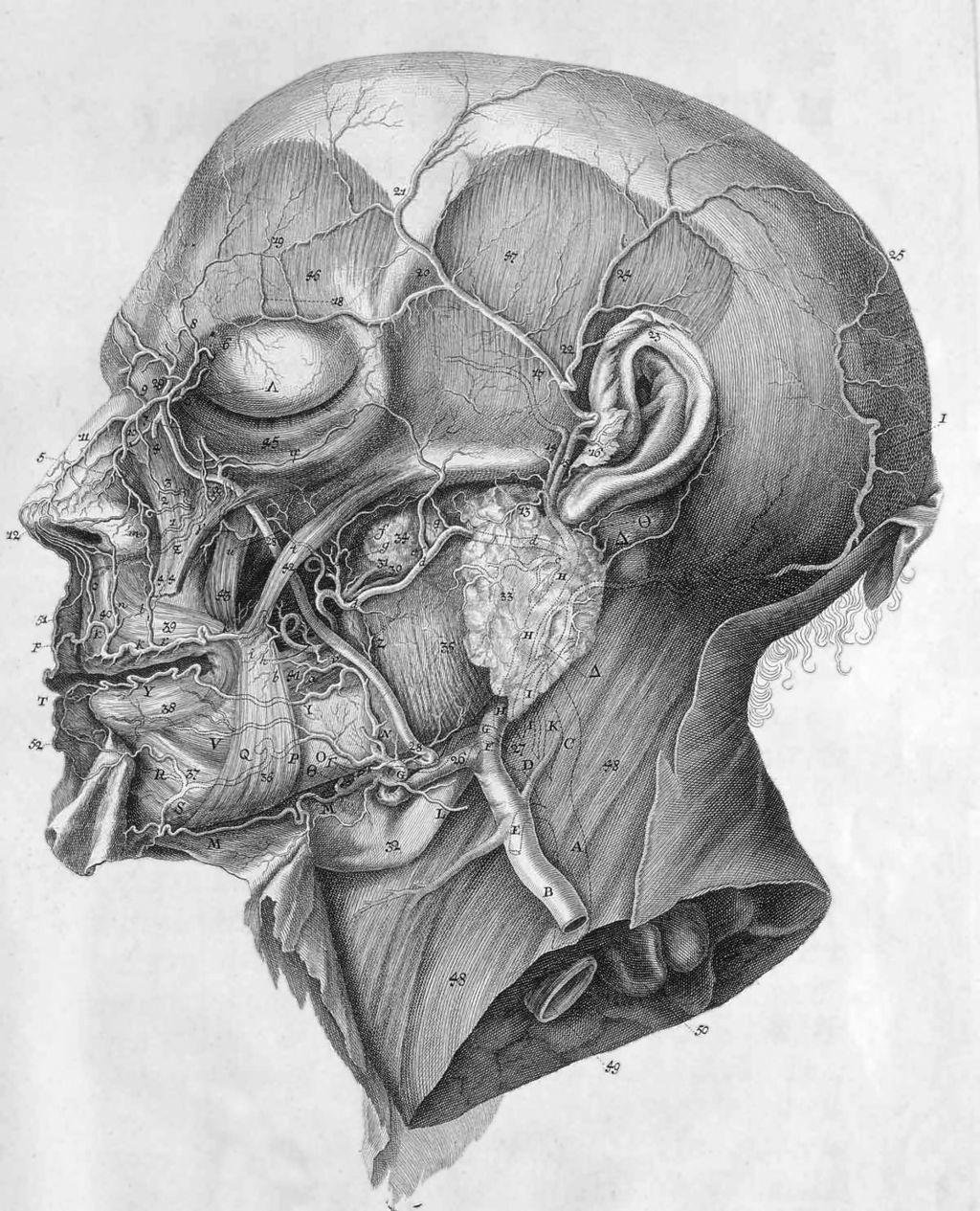 История изучения мозга от Древнего Египта до начала XX века - 33