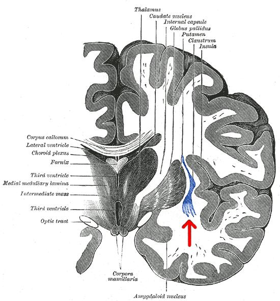 История изучения мозга от Древнего Египта до начала XX века - 44