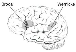 История изучения мозга от Древнего Египта до начала XX века - 49