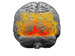 История изучения мозга от Древнего Египта до начала XX века - 57