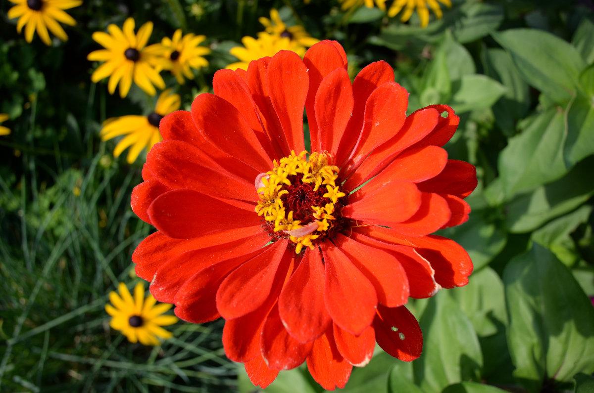 На МКС в начале 2016 года зацветут цветы - 1