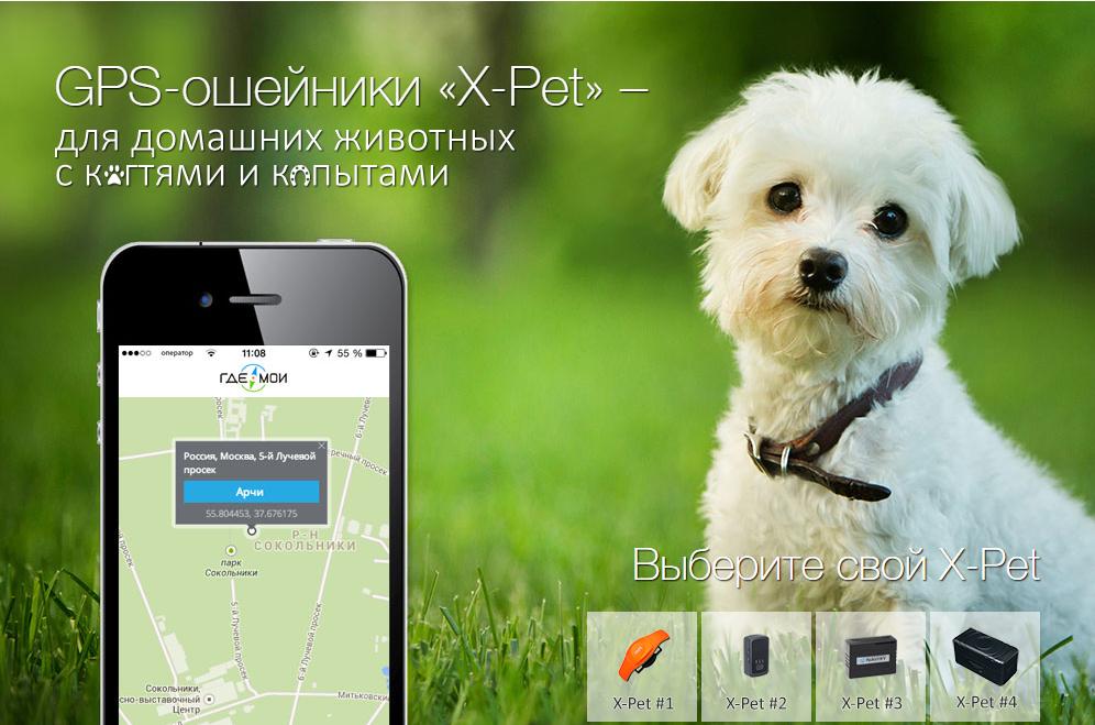 GPS-сервисы для животных: у нас и у них - 6