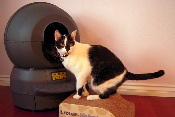 Litter Robot II: «умный туалет» для кошки в обычной квартире - 1