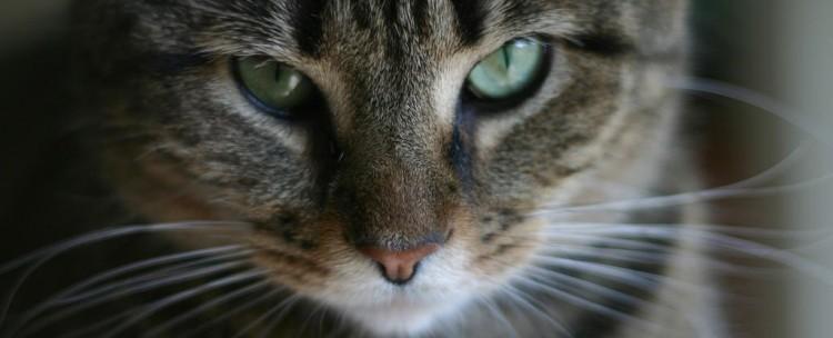 Учёные изучили паразита, которым кошки заражают людей. Обещают выпустить вакцину - 1