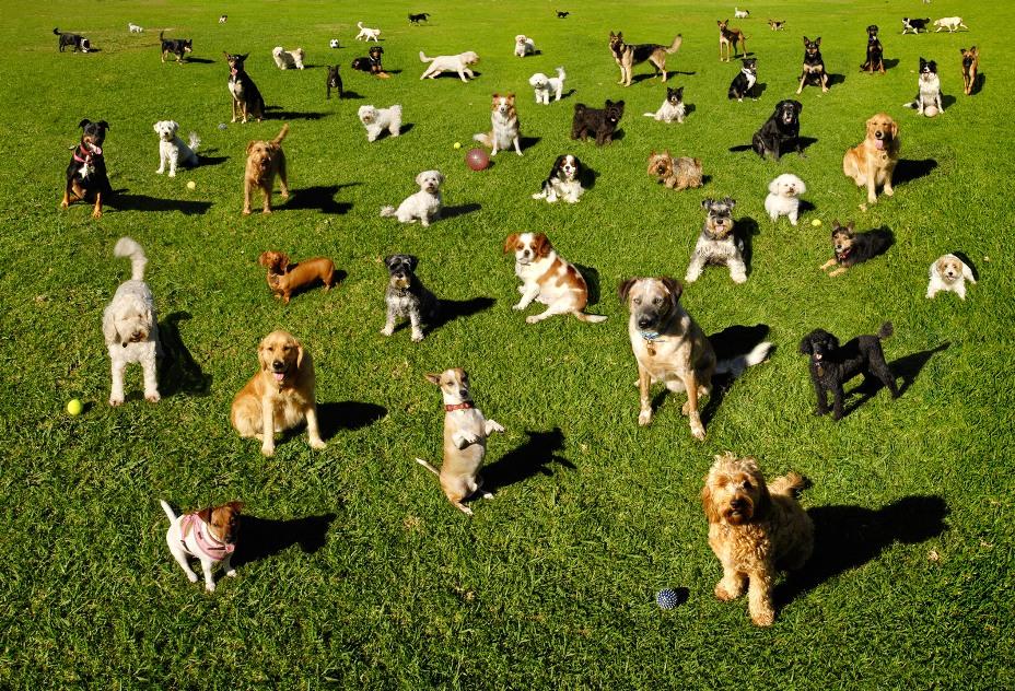 Генетики определили родину первых собак - 1