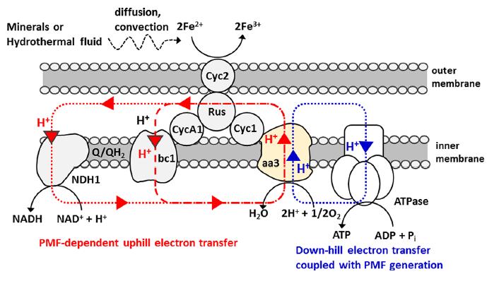 Глубоководную бактерию накормили чистым электричеством - 2