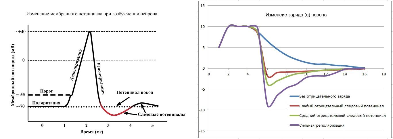 Электромагнитное взаимодействие нейронов - 2