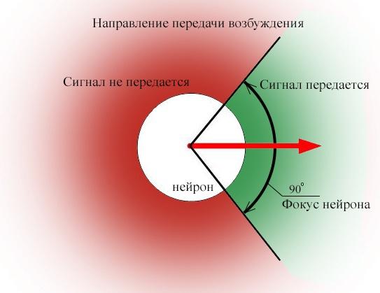 Электромагнитное взаимодействие нейронов - 4