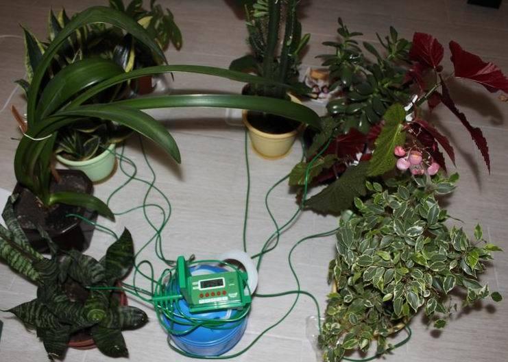 Автополив цветов: автоматизируем регулярные задачи - 9
