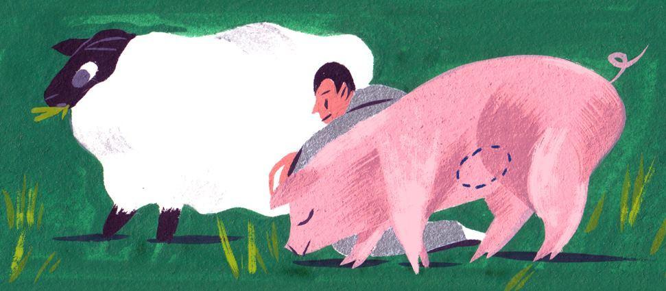 Человеческие органы и ткани для трансплантации предлагается выращивать в животных - 1