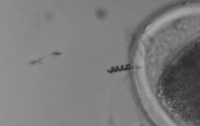 Магнитный моторчик направит сперматозоид прямо в цель - 2