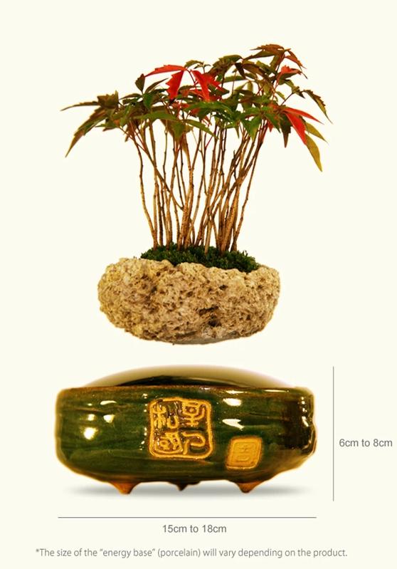 «Air Bonsai» – парящее дерево - 4