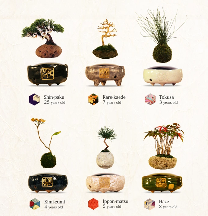 «Air Bonsai» – парящее дерево - 5