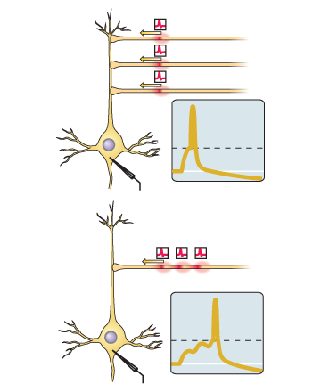 Некоторые алгоритмы под капотом мозга - 3
