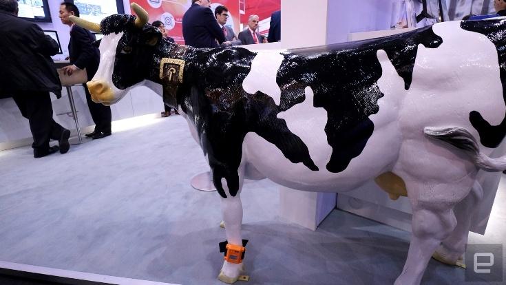 Fujitsu EDSC поможет фермерам в разведении крупного рогатого скота