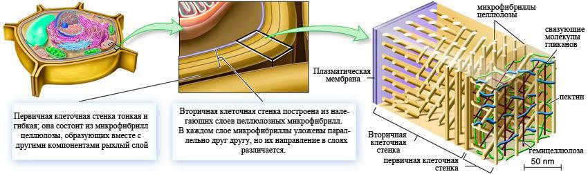 Бионическая инженерия: первые ростки - 6