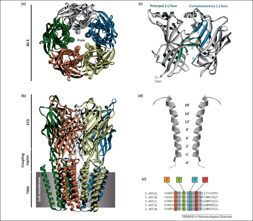 Предсказание биологической активности молекул. Часть 3а. Точно в цель - 1