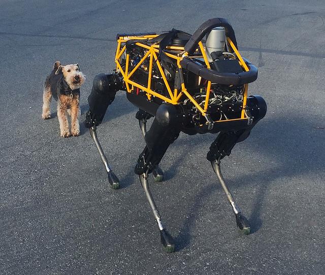 Как обычная собака реагирует на робота - 1