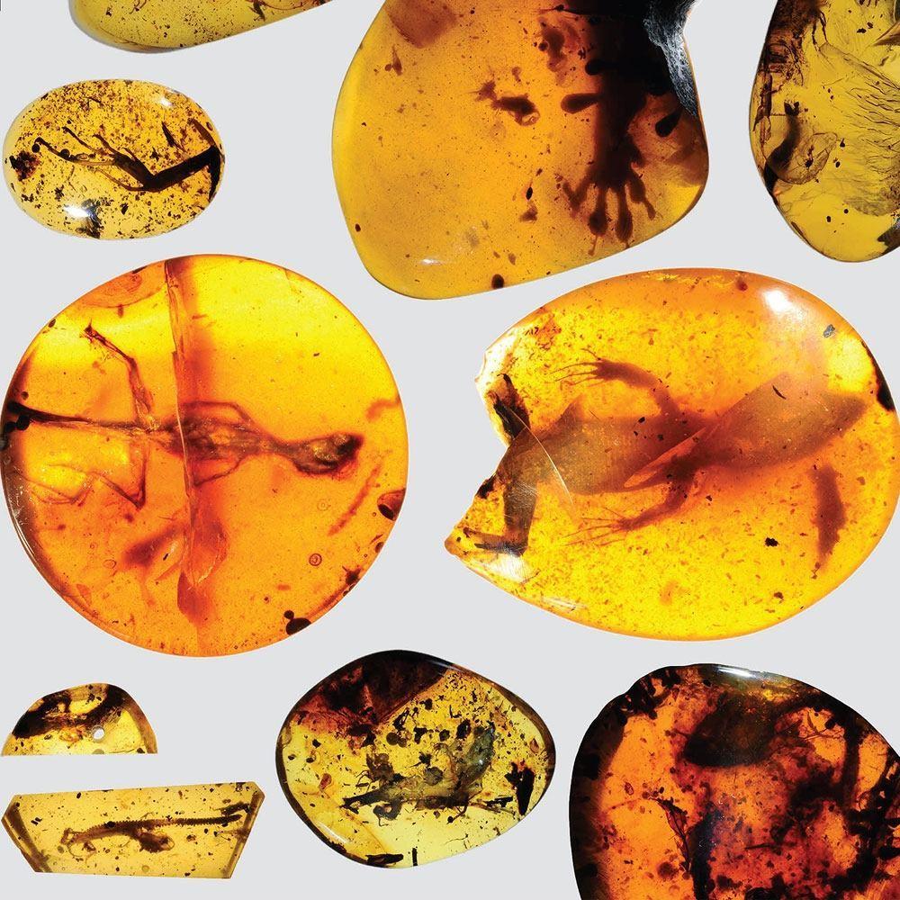 Обнаруженные в янтаре ящерицы жили 99 млн лет назад - 1