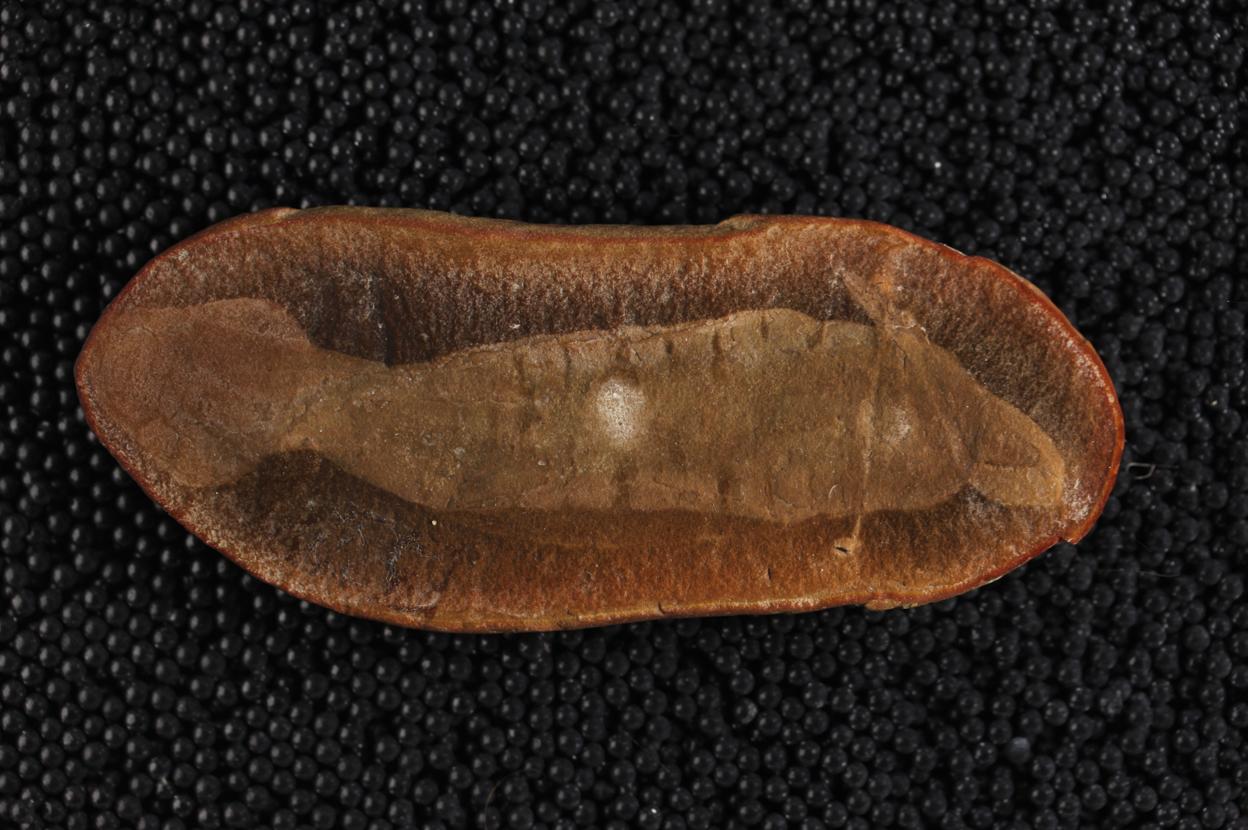 Ученые смогли классифицировать «монстра Тулли» возрастом в 307 миллионов лет - 3