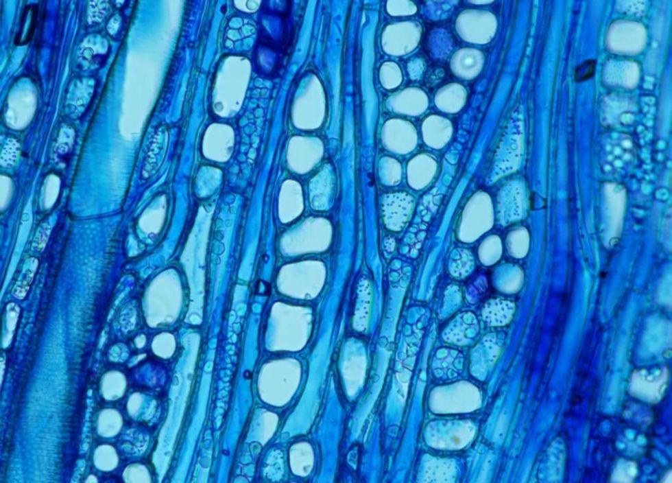 Конкурс Cool Science image: лучшие фото и видео из мира науки - 11