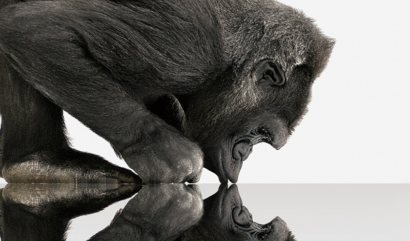 Gorilla Glass: надежная страховка для современной электроники - 3