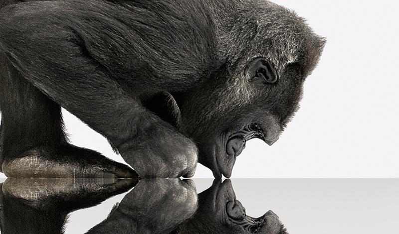 Gorilla Glass: надежная страховка для современной электроники - 3