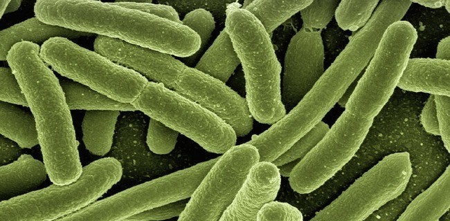 IBM использует ресурсы World Community Grid для борьбы с туберкулезом - 3